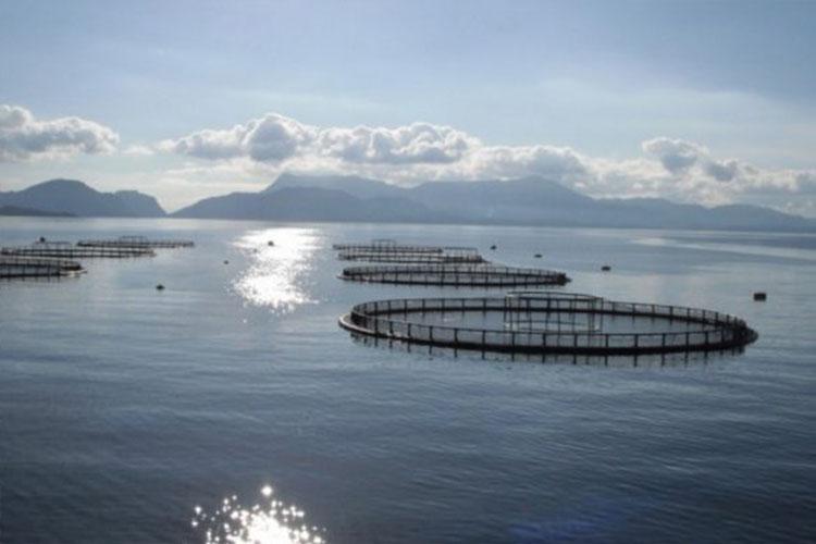 Aquaculture Pump Repair